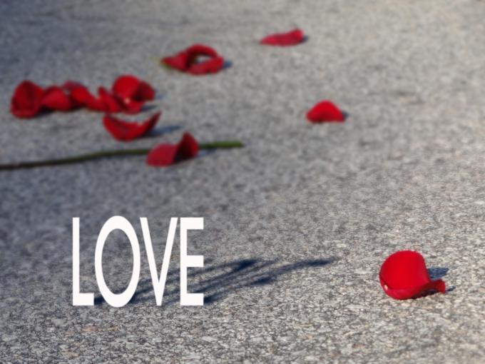 LOVE & Petals